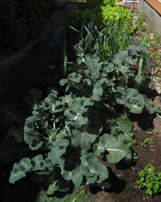 Garden_20100724_01ps