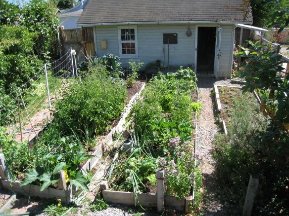 Garden_20100724_05